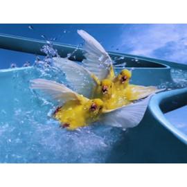 Водные аттракционы для бассейна